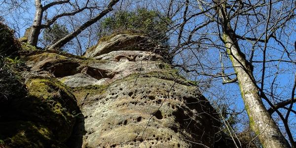 Felsblöcke aus Burgsandstein