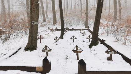 Katonai kutya temető