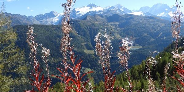Sentier du Balcon du Mont-Blanc