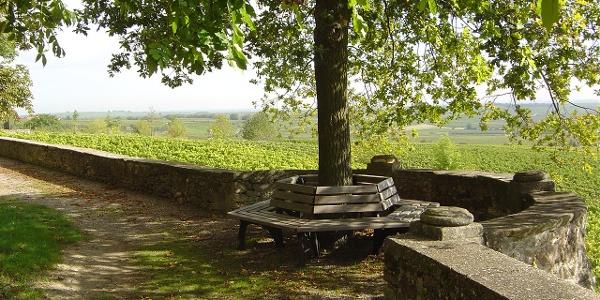 Schlossgarten Herxheim am Berg - Panoramablick in die Rheinebene