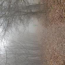 Februári köd