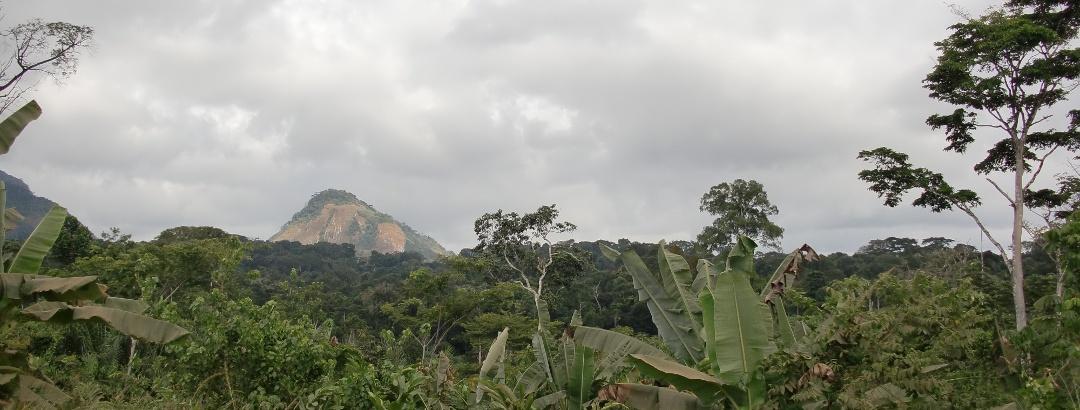 Dschungel bei Oyala, Äquatorialguinea