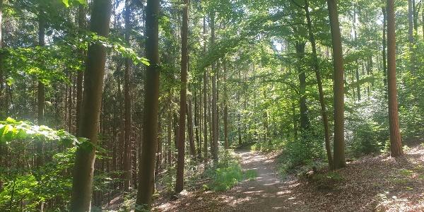 Extratour Michelsberg
