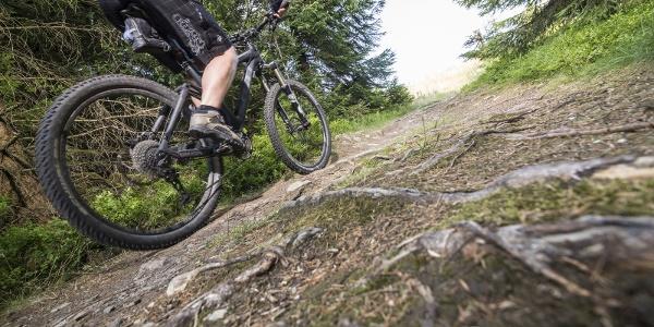 Mountainbiken in der Nationalparkregion Hunsrück-Hochwald