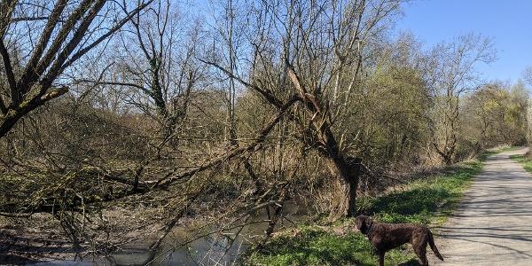 Spaziergang am Rhein durch die Auenlandschaft. (ps)