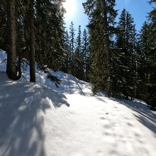 Verschneite Waldwege bei der Variantensuche