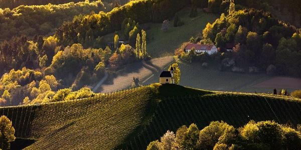 Landschaft Gamlitz