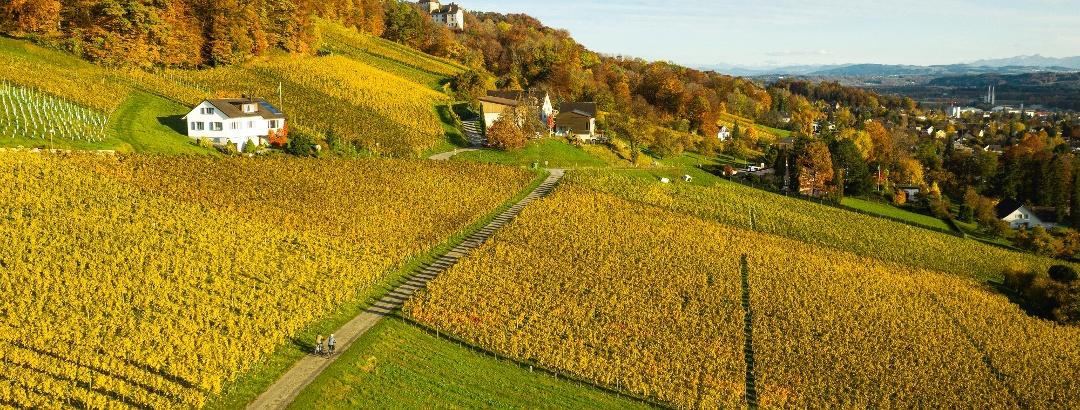 Das Schloss oberhalb von Weinfelden eingebettet im Rebberg.