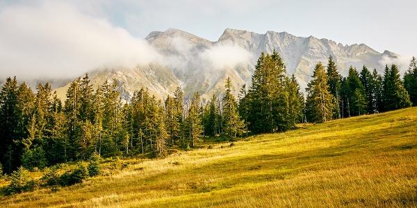 Herbstliches Moor im Gebiet Rossweid