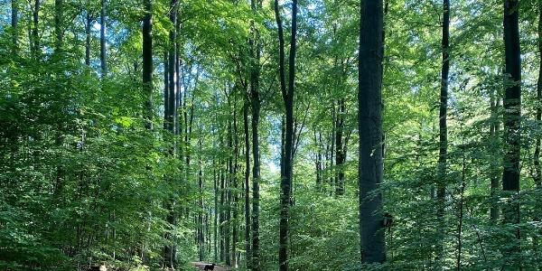Teilstück Fürstenweg