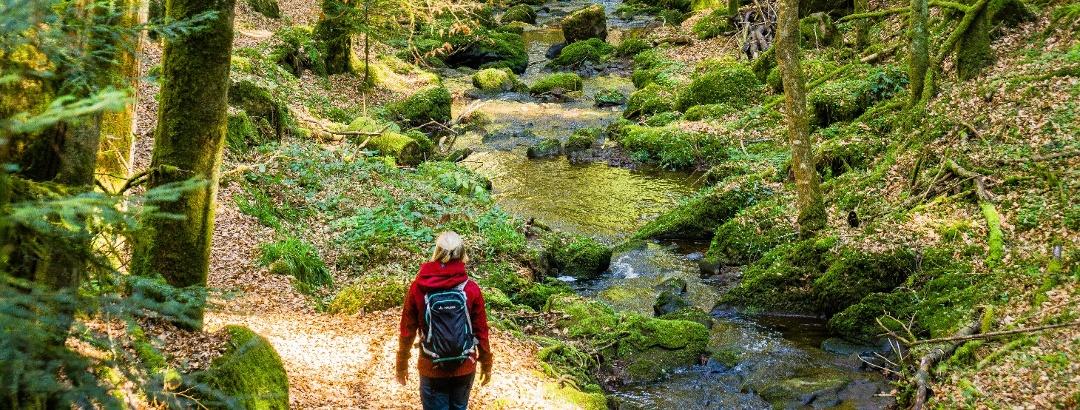 Unterwegs im Schweinbachtal begleitet den Wanderer ein malerischer Bachlauf