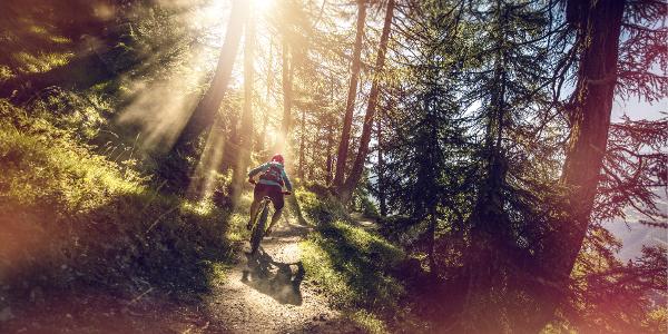 Jeux de lumière dans la forêt près de Flaschen