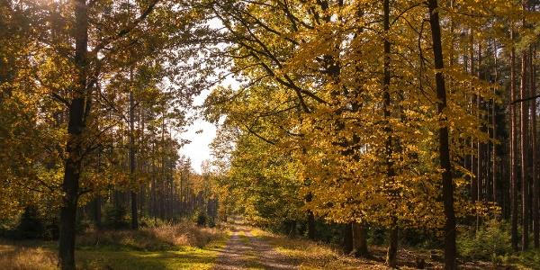 Im Pöllwitzer Wald