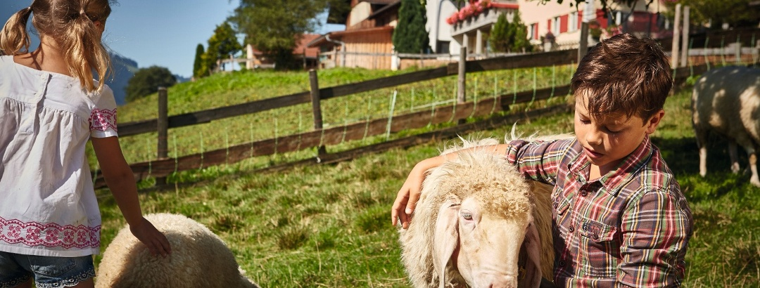 Kinder streicheln Schafe, Bauernhof Immenstadt
