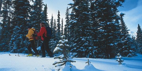 Skitourengeher im Gebirge unterwegs