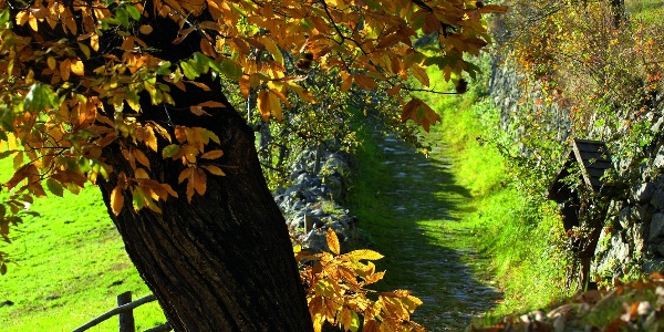 Klausen Herbst