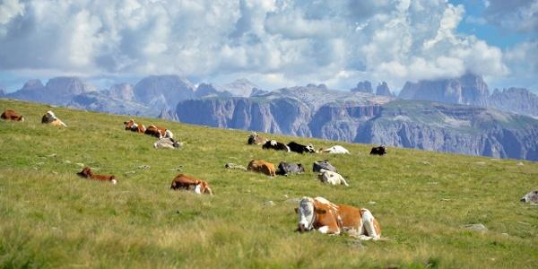 Panoramawanderung im Zeichen der Zirbe auf dem Rittner Hochplateau