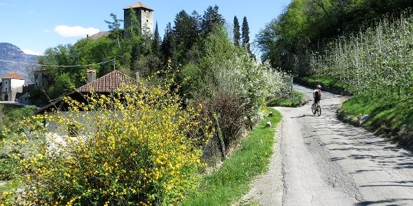 Mit dem Mountainbike durch den Vinschgau in den Meraner Talkessel und vorbei am Schloss Lebenberg.