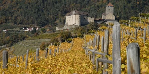 Der Weinweg Dorf Tirol ist im Herbst besonders zu empfehlen.