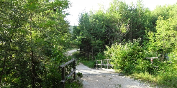 The Masaccio forest road leads steep up.