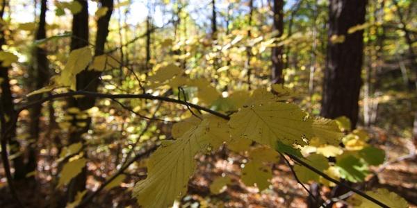 Ein Spaziergang im herbstlichen Wald von Montiggl entspannt und tut gut.