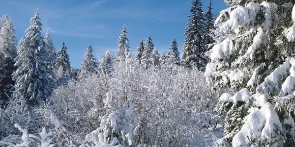 Herrlich verschneite Landschaft am Wegrand