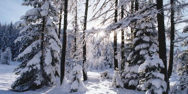 The toboggan run Vigiljoch in a fabulous winter landscape