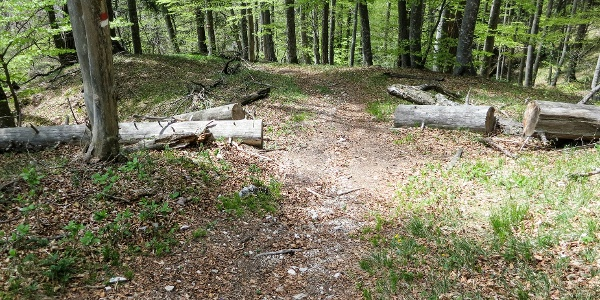 Auf dem breit angelegten Weg Nr. 3 wandert man zum Bergsattel.