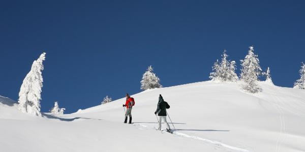 Herrliche Winterwanderung entlang verschneiter Felder