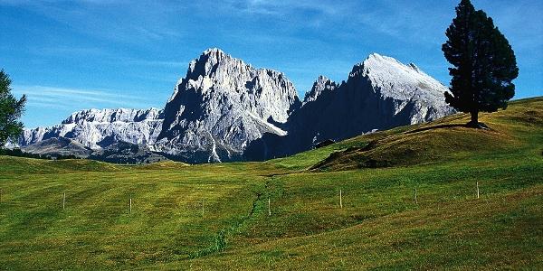Die ausgedehnten Wiesen der Seiser Alm werden von Langkofel und Plattkofel überragt.