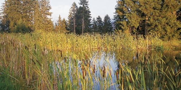 A natural pond on the Neuhütt alpe.