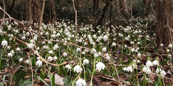 A nice family escursion is the Valle primaverile ( the spring valley) which is famous for its spring snowflake flowers.