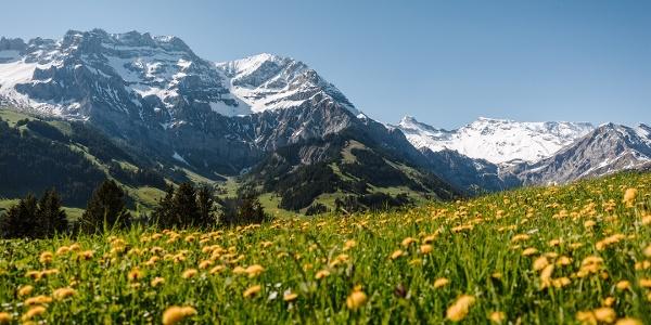 Bergfrühling Hörnliweg