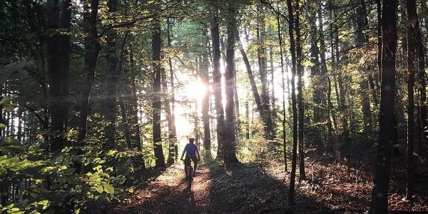 Feierabendrunde Region Aarau Wald