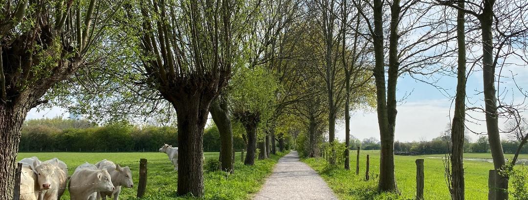 Spazierwege in der Rheinaue