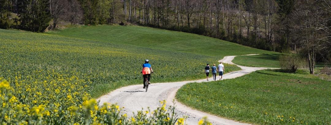 Radfahren in der Greifensteinregion