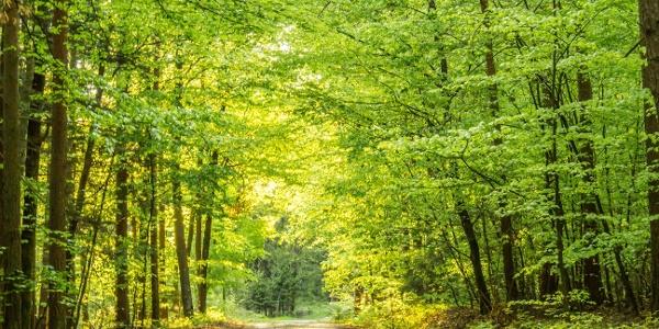 Idyllischer Wald in Bad Waltersdorf