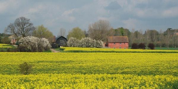 Rushes Farm, Kersey