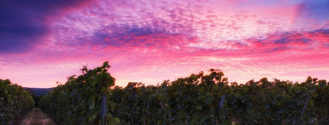 Weinanbaugebiet im Taunus