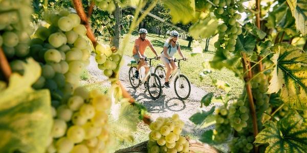 Radfahren vorbei an Weingärten