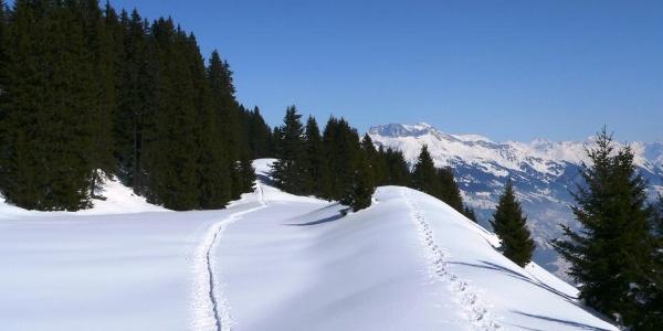 """Schneeschuhspuren auf dem """"Scäri"""""""