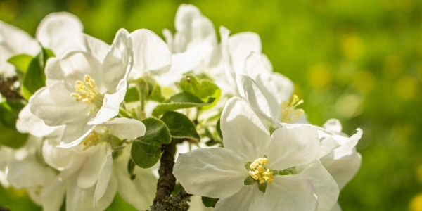 Blütenpracht in Bad Waltersdorf