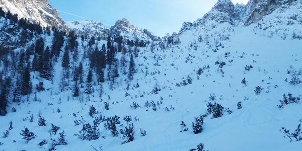 Im bewaldeten Hang mit Blick zum Lizumer Kar