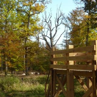 Besucherplattform an der Neuweiler Viehweide