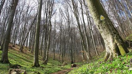 Urcuș abrupt prin pădure