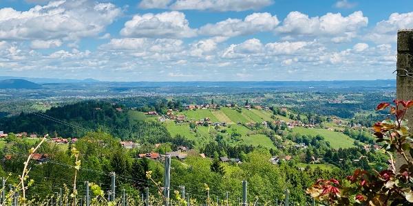 Weingarten Langegg