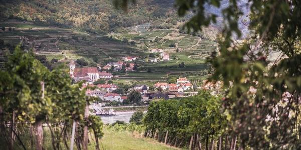Ausblick von Rossatz an das andere Donauufer