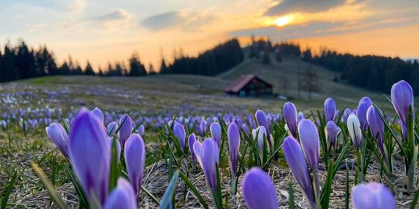 Frühlingsboten am Hochsiedel