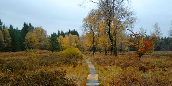 Moorlandschaft Struffelt mit Holzstegen