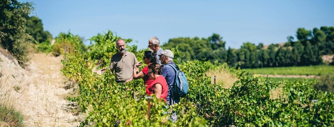 Wine tour in the vineyards of the Dentelles de Montmirail
